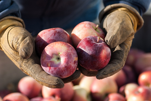 Food Farms and Health apples